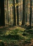 höstskogprydnad Fotografering för Bildbyråer