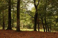 höstskogsmark Royaltyfria Bilder
