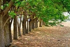 Höstskogträd. grönt trä för natur arkivbild