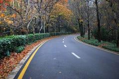 Höstskogväg i träna Arkivfoto