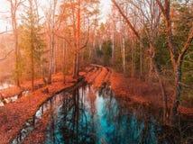 Höstskogväg med pölar i skog royaltyfri fotografi