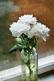 Höstsnittblommor på det fuktiga fönstret Royaltyfria Bilder