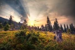 Höstsolnedgång i bergen av Ukraina Arkivfoton