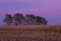 Höstsolnedgång i en cornfield arkivbilder
