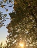 Höstsolnedgången faller till de guld- gula sidorna royaltyfri foto