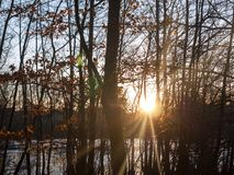 höstsolnedgångljus till och med landskap för skönhet för plats för skogträd Fotografering för Bildbyråer