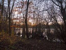 höstsolnedgångljus till och med landskap för skönhet för plats för skogträd Royaltyfri Foto