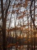 höstsolnedgångljus till och med landskap för skönhet för plats för skogträd Arkivfoto