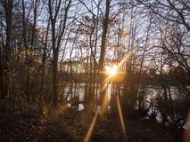 höstsolnedgångljus till och med landskap för skönhet för plats för skogträd Royaltyfri Bild