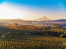 Höstsoluppgång av Mt-huven med mist som stiger i de omgeende vingårdarna och fruktfruktträdgårdarna royaltyfria bilder
