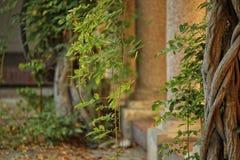 höststaden houses leavestreesyellow Royaltyfria Bilder