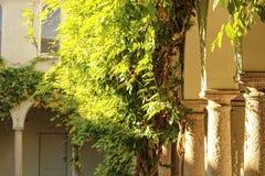 höststaden houses leavestreesyellow Arkivfoto