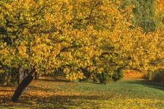 Höststaden parkerar Park i fallen Ljusa höstträd i pet Arkivfoto