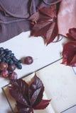 Höststilleben i burgundy färger Höst- eller vinterbegrepp arkivfoto