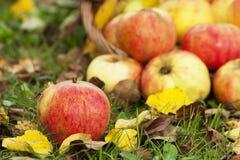 Höststilleben med äpplen Royaltyfri Fotografi