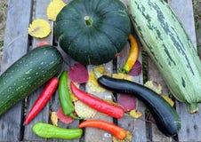 Höststilleben med mogna grönsaker Arkivbilder