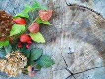 Höststilleben med physalisen, vanlig hortensiahortensia, hund-ros Royaltyfria Bilder