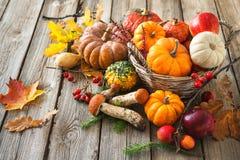 Höststilleben med pumpor, majskolvar, frukter och sidor Fotografering för Bildbyråer
