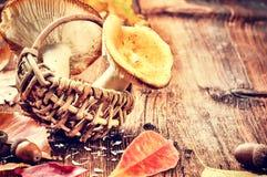 Höststilleben med skogen plocka svamp (russulaen) arkivbild