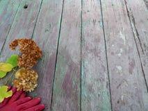 Höststilleben med vanlig hortensiahortensia och röda handskar på tappningträtextur Royaltyfri Fotografi