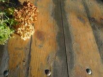 Höststilleben med vanlig hortensiahortensia på tappningträtextur Royaltyfria Bilder