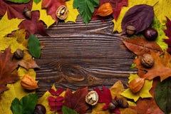 Höststilleben, nedgångsidor, gåvor av hösten, kopieringsutrymme, uppvaktar Royaltyfri Fotografi