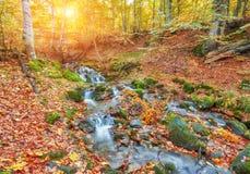 Höstström i skogen, europeiskt landskap för guld- höst royaltyfri foto