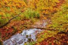 Höstström i skogen, europeiskt landskap för guld- höst arkivfoton