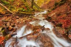 Höstström i skogen, europeiskt landskap för guld- höst royaltyfria foton