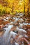 Höstström i skogen, europeiskt landskap för guld- höst royaltyfria bilder