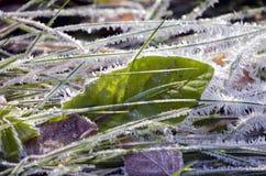 Hösttidfrost med iskristaller på gräs Royaltyfri Fotografi