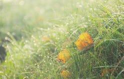 Hösttjänstledigheter på gräset Royaltyfria Foton