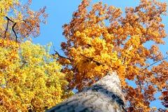 Höstträd i himlen arkivbild