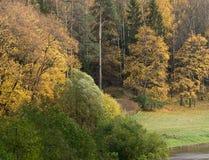 Höstträd i parkera Arkivbilder