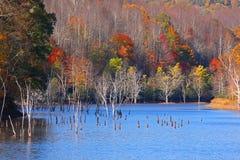 Höstträd i sjön royaltyfri bild