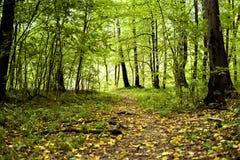 Höstträd i skog med gult stupat sidabegrepp royaltyfri foto
