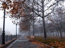 Höstträd med dimma i en stad parkerar arkivbilder