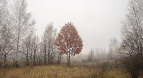 Höstträd med röd lövverk i dimma arkivfoto