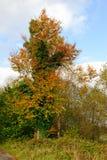 Höstträd på en solig dag Arkivfoto