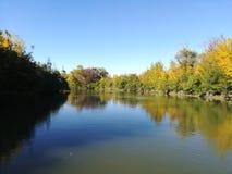 Höstträd på flodbanken arkivbild