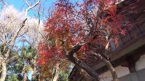 Höstträd på parkera i Tokyo, Japan stock video