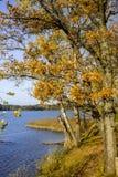 Höstträd på sjön i Litauen Arkivbilder