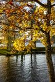 Höstträd på sjön i Litauen Royaltyfri Foto