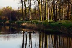 Höstträd reflekterade i vatten i en parkera Fotografering för Bildbyråer