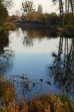 Höstträd runt om ett damm i en parkera Arkivfoto