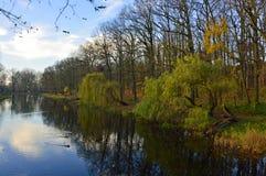 Höstträd vid ett damm i en parkera Arkivfoto