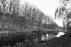 Höstträd vid ett damm i en parkera royaltyfria bilder