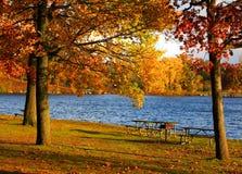Höstträd vid sjön royaltyfri bild