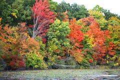 Höstträd vid sjön arkivfoto