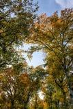Höstträdblast och himmel Royaltyfria Foton